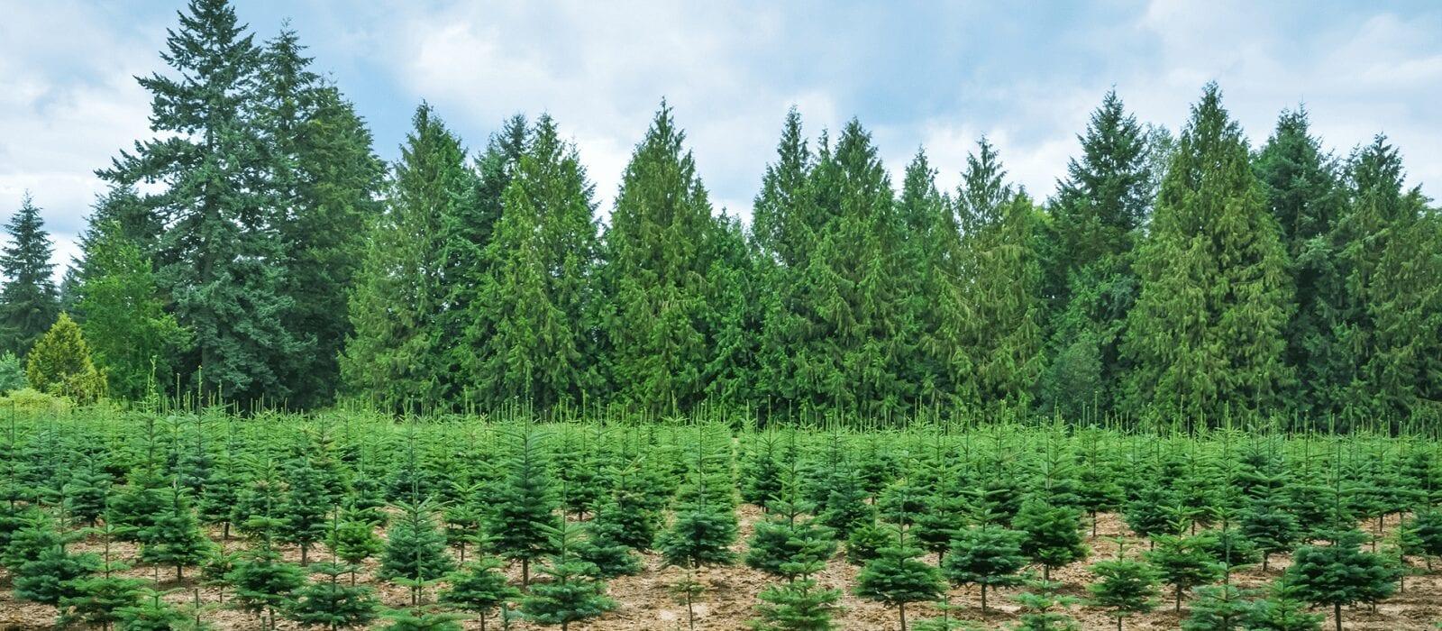 achmea-innovation-climate-forest